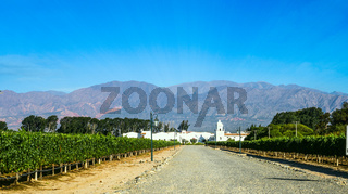 Vineyard in Cafayate, Argentina
