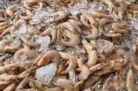 Many shrimps on market