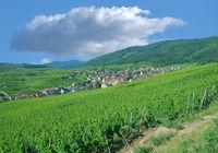 Weinort Riquewihr in Grand Est region(frueher Elsass),Frankreich
