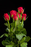 bouquet fresh red roses
