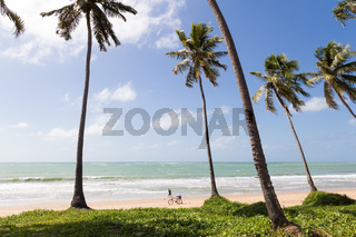 Paradise with coconut trees and in the background a bicycle and an anonymous person