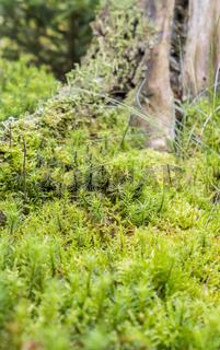 ground cover vegetation