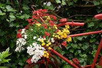 Rotes Fahrrad mit Blumenschmuck