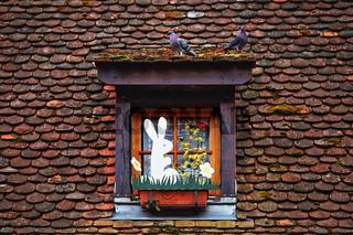 Tauben und Hasen