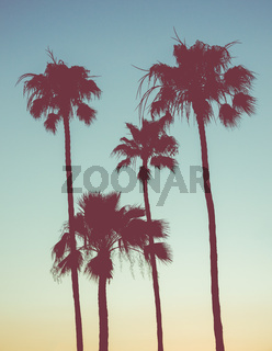 Retro Sunset Palms