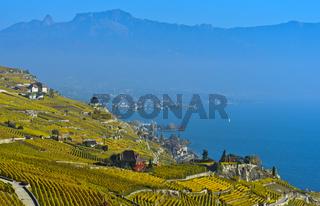 Goldener Herbst über dem Genfersee, Lavaux, Waadt, Schweiz
