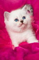 Kätzchen auf rosa Decke
