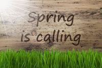 Sunny Wooden Background, Gras, Text Spring Is Calling