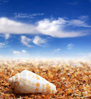 Shell of cone snail on sand beach