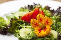 Kapuzinerkresse Blume auf gemischtem Salat