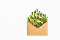 opened craft paper envelope filled with green leavess on white background. healthy lifestyle offer. Care about environment. Recycling and using trees and nature resources concept . top view. flat lay.