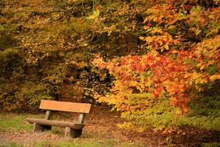 Bank im Herbst