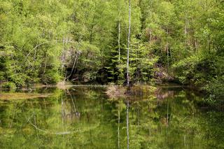 Spiegelung im Wald. Deutschland