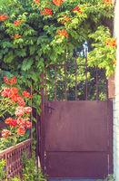 Gate in garden