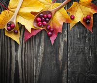 berries of cranberries and a wooden spoon on a maple leaf