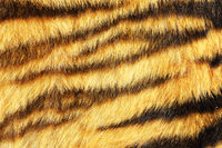 tiger stripes on real animal leather ready for your design