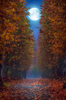 Pathway in a park during full moon