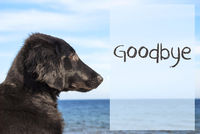 Dog At Ocean, Text Goodbye