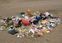 Hund wühlt im Müll