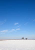 Schneebedecktes Feld mit Walnussbäumen