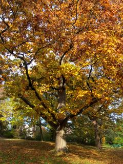 Herbstlich Baum