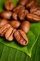 Fair trade organic coffee beans