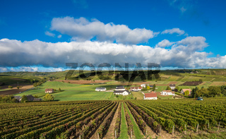 Vineyards of Loire Valley, France