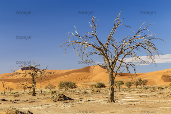 dead tree and sand dunes in Sossusvlei, Namibia