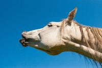 Pferd im Portraet