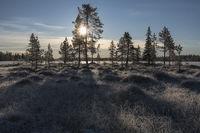 reifbedeckte Sumpflandschaft im Gegenlicht, Lappland