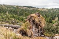 Nach einem Sturm entwurzelte Bäume eines Waldes