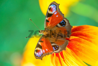Butterfly on a flower