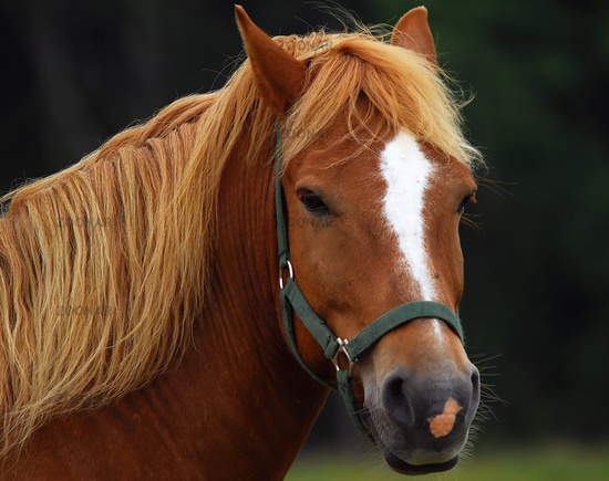 Portrait of a horse