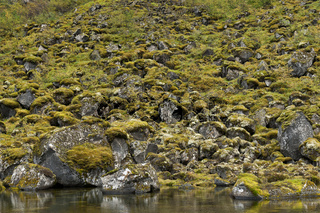 Island, bemooste Felsen in der Asbyrgi-Schlucht