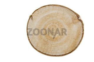 Birkenholz, Querschnitt auf weißem Hintergrund
