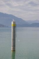 Polder am Zuger See