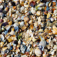 Natural background of seashells on wet sand beach