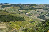 Weinberg-Terrassen im Tal des Rio Pinhao, Weinbaugebiet Alto Douro, Portugal