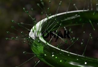 Drocera flower 3d illustration
