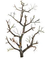 Dead tree concept