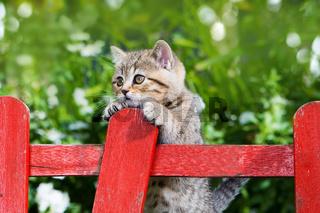 Kätzchen am Gartenzaun