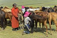 Junger Mann bringt Fohlen zur Beruhigung der Stute beim Melken