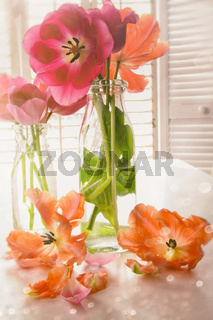 Colorful Spring tulips near window