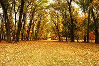 beautiful pedestrian path in orange autumn woods in evening light