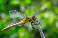 dragonfly on a grass background