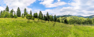 Meadow with wildflowers and a tree line
