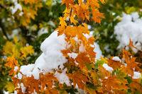 Wintereinbruch im Herbst Herbststimmung