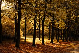 Autumnal Gold