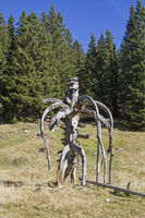 Skurriles Kunstwerk der Natur