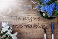 Sunny Spring Flowers, Quote Life Begins In A Garden